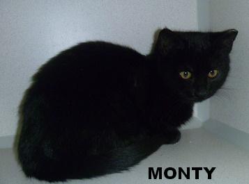 Monty 3 mos