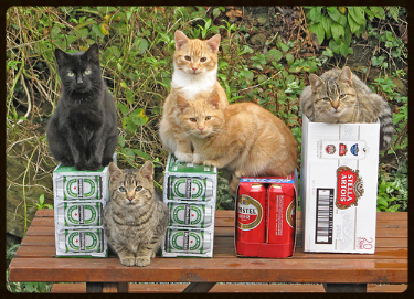 08-Cats-Who-LOVE-Beer-The-Sopranos