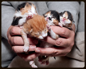 Pile-of-Foster-Kittens 2