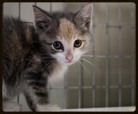 foster a kitten 2