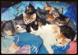 kittens 1.31.15