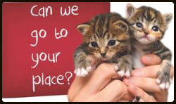 save-a-kitten-can-we-go-to-your-place 2