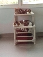 Kuranda cat tower donation