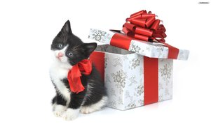 Cute-Christmas-Kittens