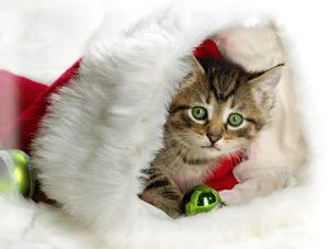 New_Santa_Cat