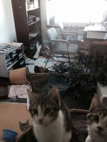 office kittens 4