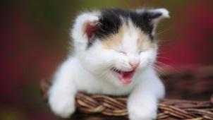 10-esilarant-funny-cats-4