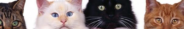 cat_header 2